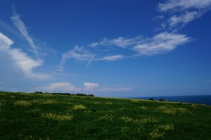 Пролетна свежест